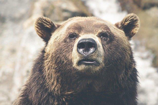 Djur och natur ute i Västerbotten